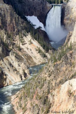 Lower Falls - Grand Canyon of Yellowstone