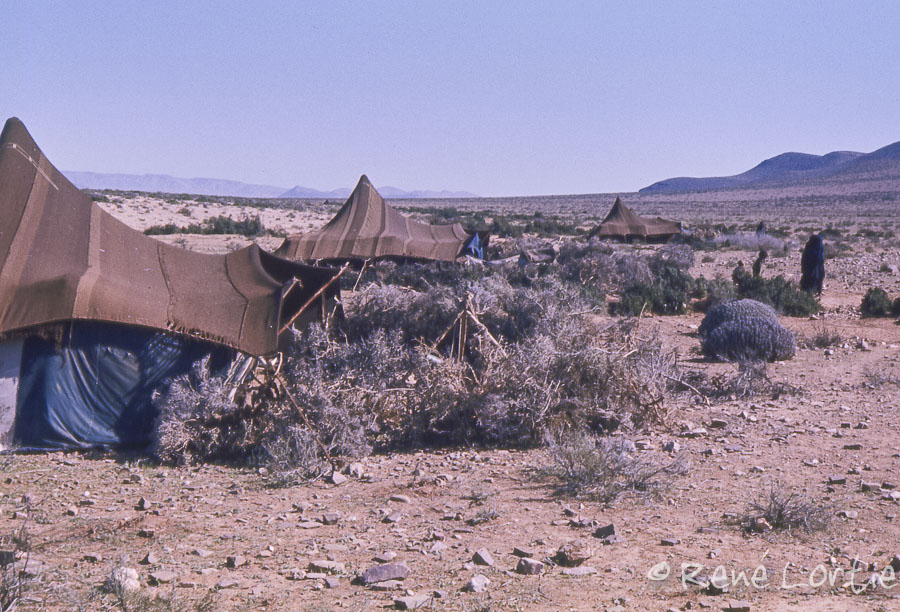 Campement touareg près de Goulimine (nomades du désert)