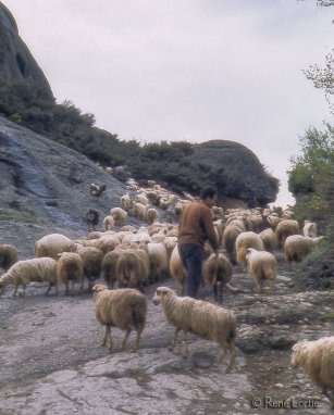 Berger et son troupeau