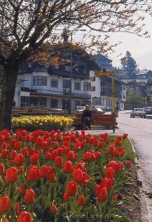 Claire dans un petit parc de tulipes en Autriche près d'Innsbruck