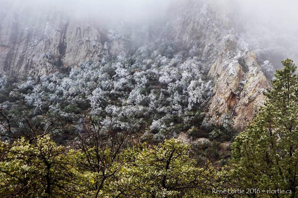 Paysage du Lost Mine Trail par un petit matin givré