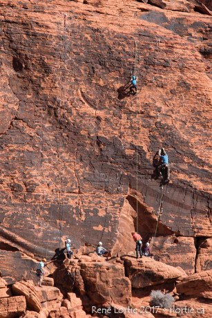 L'escalade de parois est fort populaire à Red Rock Canyon