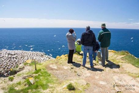 La pointe de Cape St. Mary's
