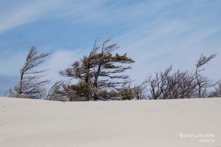Dunes de sable à la fin du sentier Old Mail Road