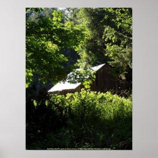 Sunlit Barn Roof #1