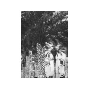 Black and White, Palm Tree Photo on Canvas. Canvas Print