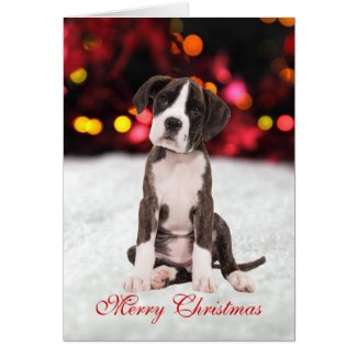 Boxer Puppy Christmas Card
