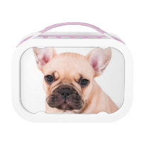 French bulldog lunch box