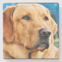 Golden Labrador Retriever Stone Coaster