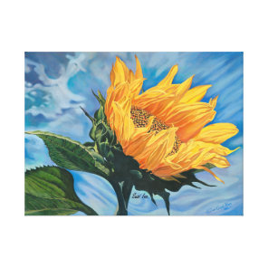 Golden Sunflower Blue Sky Stretched Canvas Print