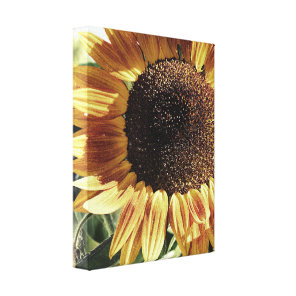 Gorgeous Sunflower | Photograph by Cherie | Floral Canvas Print