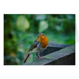 Mr Robin Greeting Card