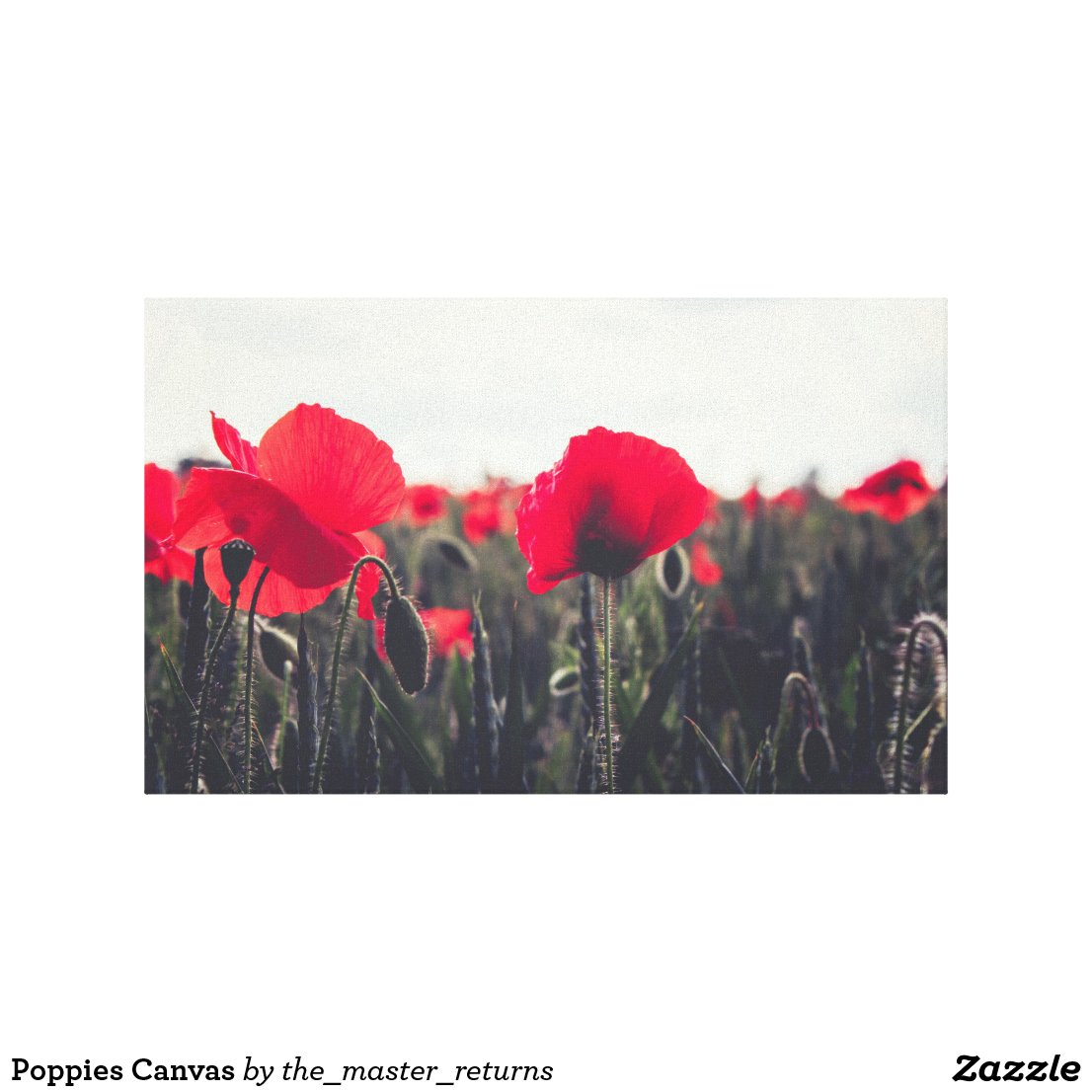 Poppies Canvas
