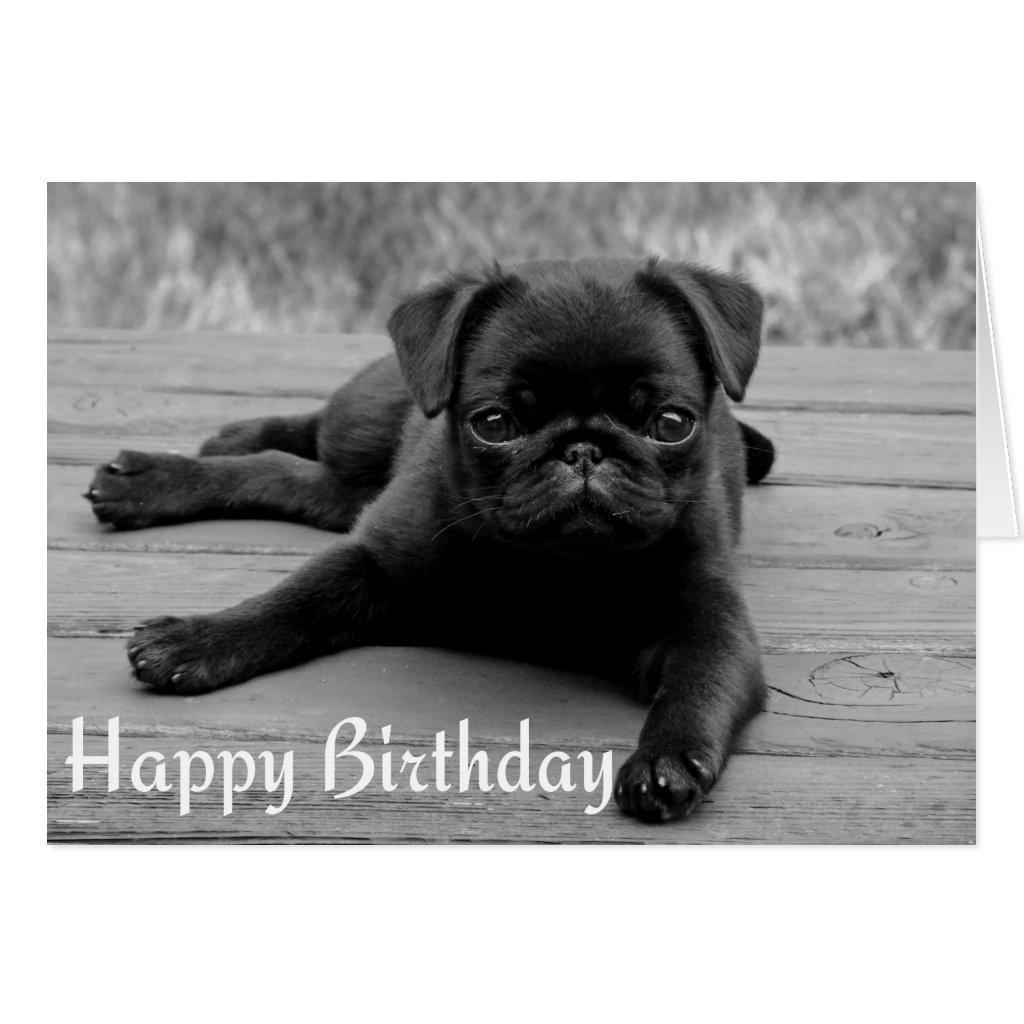 Pug Puppy Happy Birthday Card