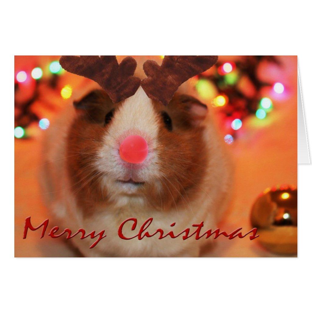 Rednose Christmas