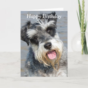 Schnauzer miniature dog photo birthday card