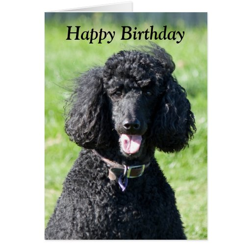 Standard Poodle Dog Photo Happy Birthday Card Zazzle