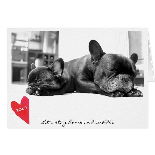 Valentine's Day Cute French Bulldog Photo Cuddle