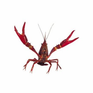 3D Crawfish Ornament Photo Cutout