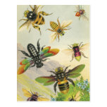 ❤️ A Bevy of Beautiful Bees Postcards