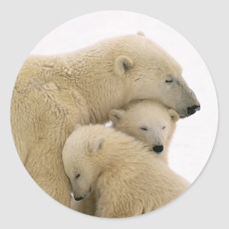 animals-polar-bear stickers