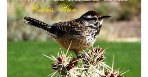 colorado state bird flower and tree flowers ideas for review