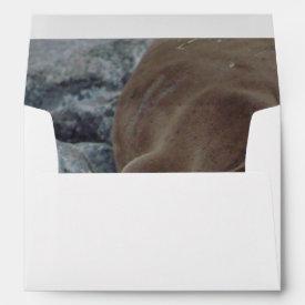 Asleep on the Rocks (Sea Lion)