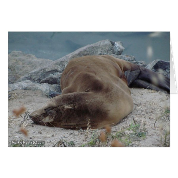 Asleep on the Rocks (Sea Lion) Card