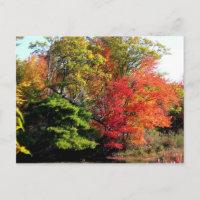 Autumn Lake 6 postcard