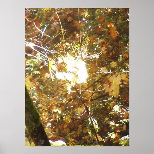 Autumn Sun Rays #14 print