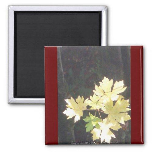 Autumn Sun Rays #34 magnet