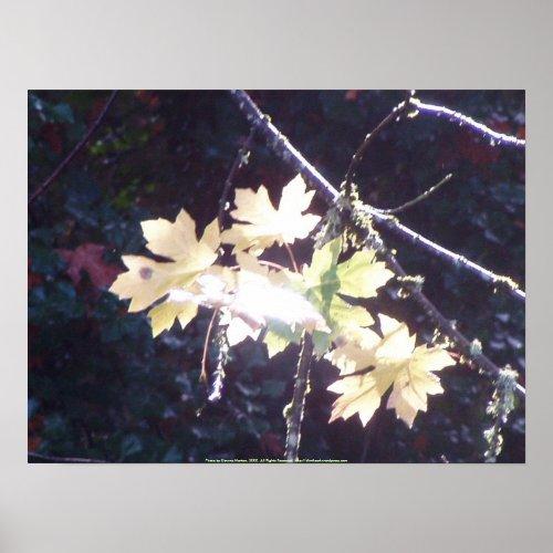 Autumn Sun Rays #38 print