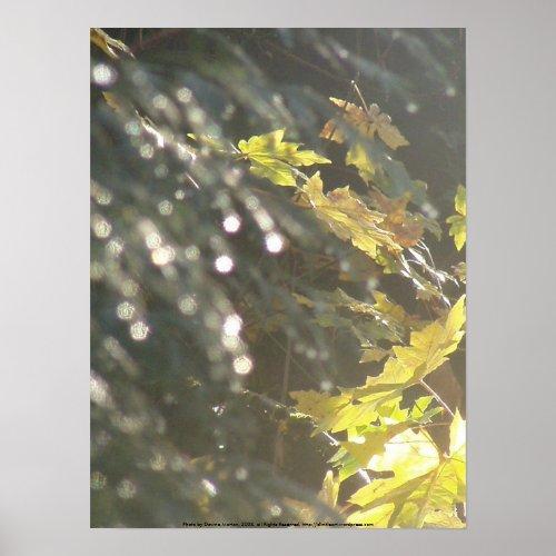 Autumn Sun Rays #53 print