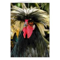 Bad Hair Chicken Photo Funny Birthday Card