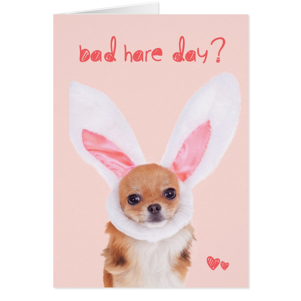 Bad Hare Day Chihuahua Easter card
