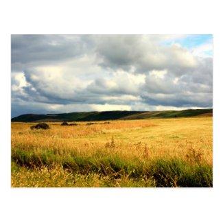 Beautiful summer fields of Scotland Post Card