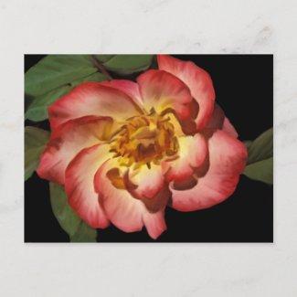 Betty Boop Postcard postcard