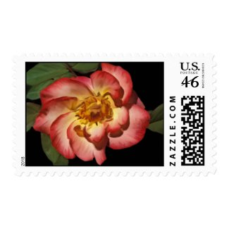 Betty Boop Rose Postage stamp