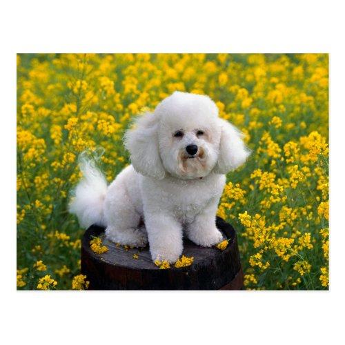 Bichon Frise Puppy Dog Blank Greeting Post Card