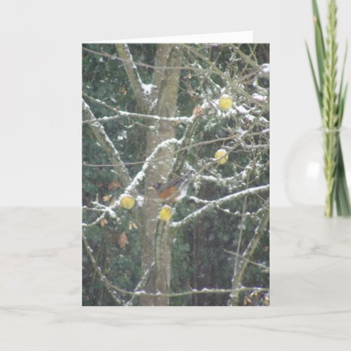 bird in a winter tree card