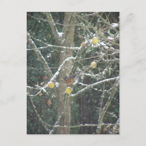 bird in a winter tree postcard