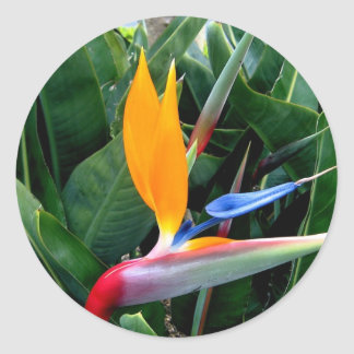 Bird Of Paradise Flower - California Stickers