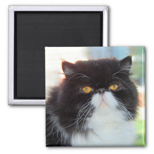 Black and White Persian Cat Magnet magnet