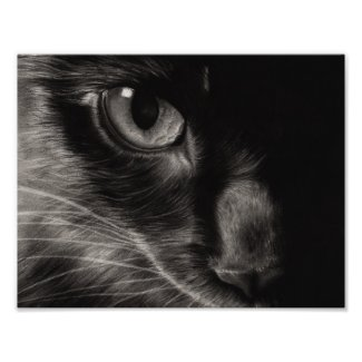 Black Kitten Photo Poster