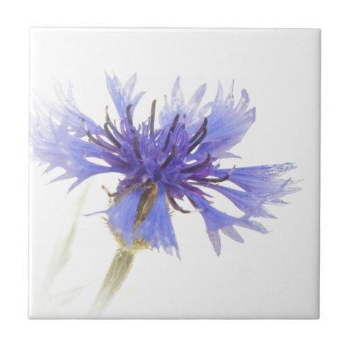 Blue Cornflower Photo - Ceramic Tile