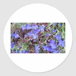 Blue Flower in California Round Stickers