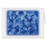 Blue Hydrangea Blossoms cards