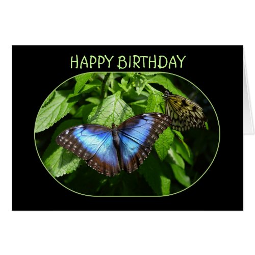 Blue Morpho Butterfly Happy Birthday Greeting Cards
