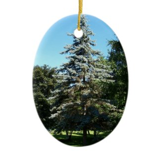 Blue Spruce Ornament ornament