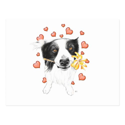 Border Collie And Hearts Postcard
